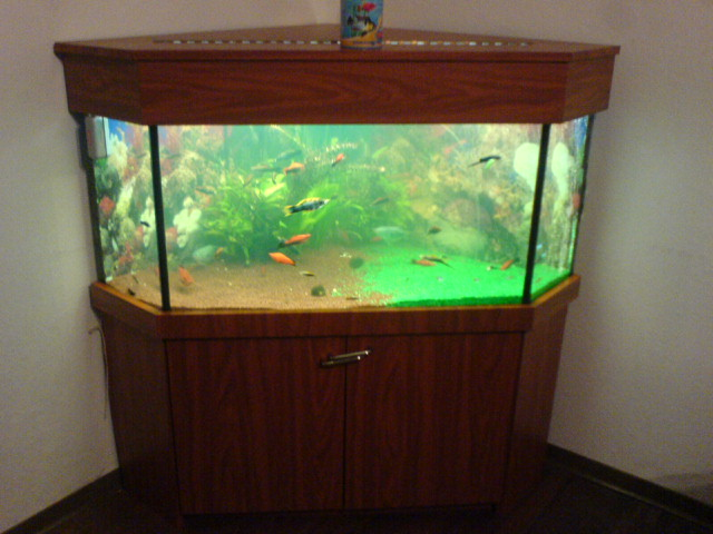 wieviel liter hat dieses aquarium. Black Bedroom Furniture Sets. Home Design Ideas
