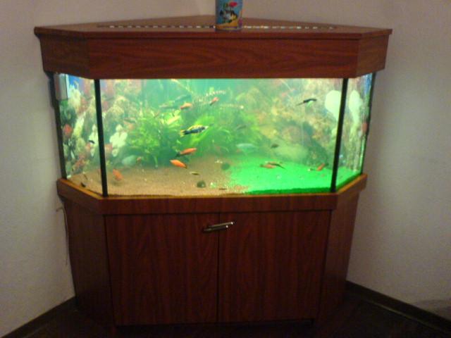 eckaquarium aquarium 350 liter mit viel zubeh r in bielefeld aquarien und zubeh r. Black Bedroom Furniture Sets. Home Design Ideas