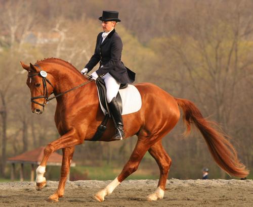 suesse hannoveraner pferde zum verkauf in 20095 pferde. Black Bedroom Furniture Sets. Home Design Ideas